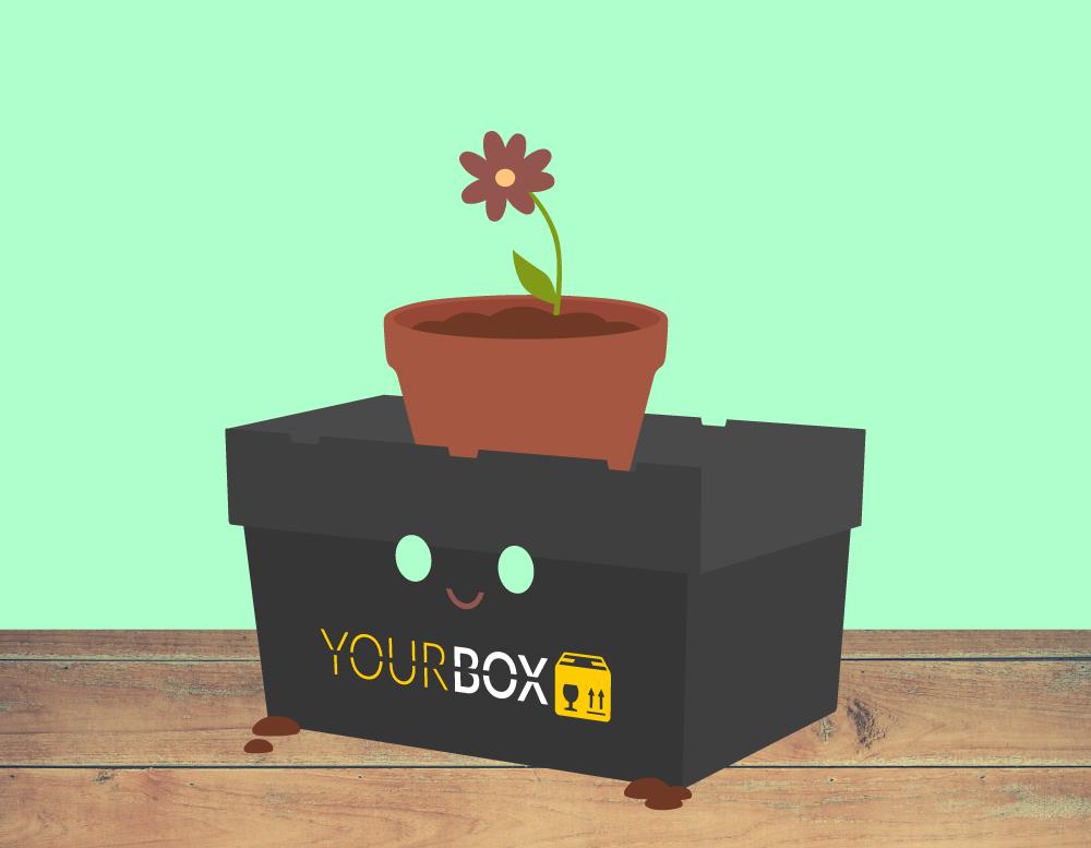 YOUR BOX Umzugsbox mit Blumentopf